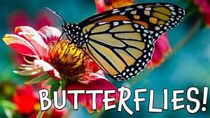 Butterflies  Fun Butterfly Facts For Kids