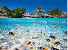 Tahiti Arts et Voyages
