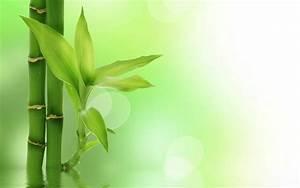 Bamboo Backgrounds Image