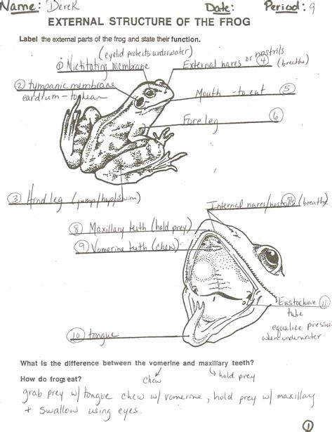 frog dissection worksheet answers homeschooldressage