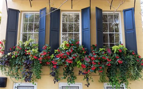 Best Window Plants by Trailing Plants For Window Boxes Our Top 6 Picks For