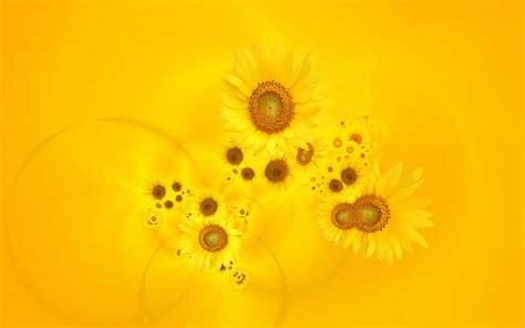 yellow flower wallpapers desktop backgrounds   hd