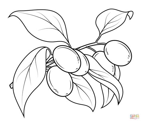 Coloring Oleo by Olive Tree Coloring Page At Getcolorings Free