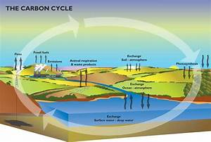 The Carbon Story