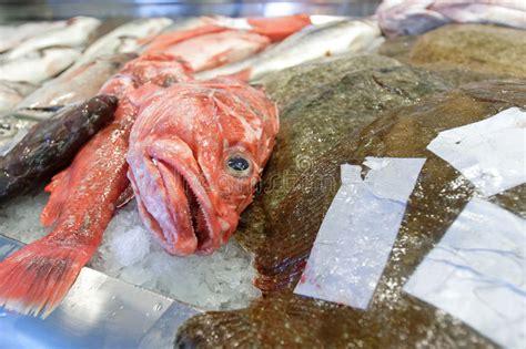 grouper fish market