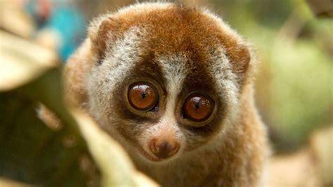 animales seis animales en peligro de extincion por culpa