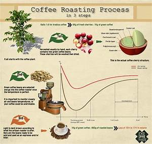 Coffee Roasting Process Infographic Cangkir Kopi Kopi