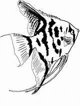 Fish Coloring Pages Angel Aquarium Angelfish Printable Freshwater Colors Miracle Royalty Animals Timeless Bright Choose Favorite sketch template