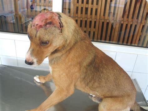 toetungsstationen fuer hunde im ausland tierquaelerei