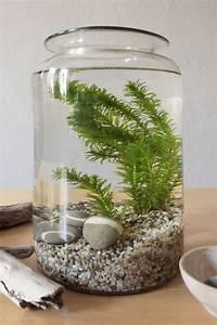 Aquarium Dekorieren Ideen : ein aquarium ohne fische die home edition eines kristallklaren bergsees dekoration ~ Bigdaddyawards.com Haus und Dekorationen