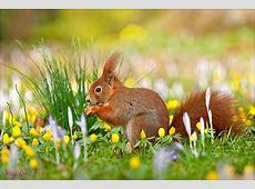 Frohe Ostern Forum für Naturfotografen