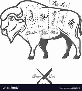 Vintage Butcher Cuts Of Bison Buffalo Scheme Vector By