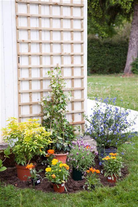 plantes grimpantes en pot planter une plante grimpante dans un massif de fleurs galerie photos d article 10 11