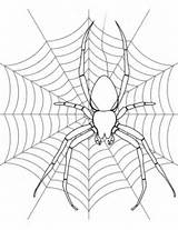 Spider Coloring Its Web Pages Printable Halloween Drawing Colouring Spiders Adult Supercoloring Template Pretty Categories sketch template