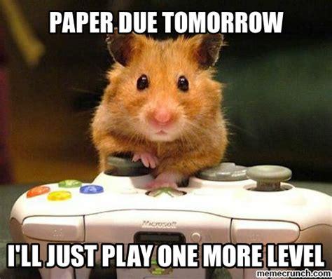 Hamster Meme - gamer hamster