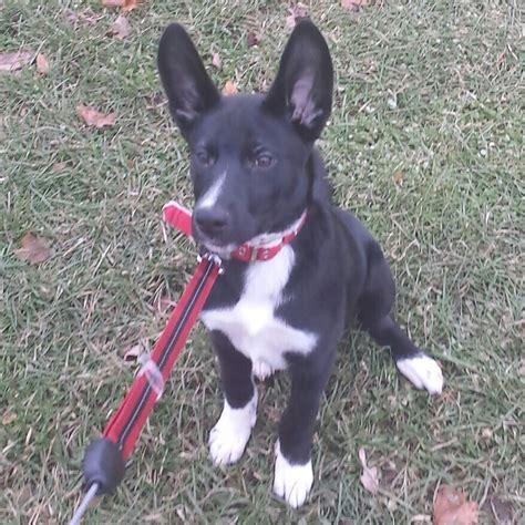 List Of Dog Crossbreeds