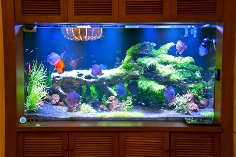 planted freshwater aquarium lighting orphek