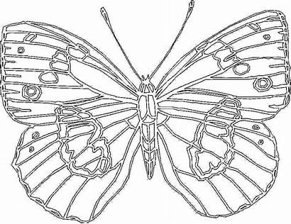 Coloring Pages Butterfly Printable Beach Sheets Princess