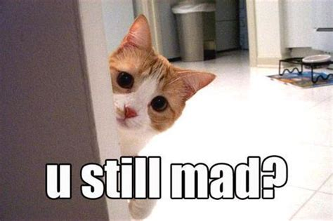 Mad Kitty Meme - funny kittens with guns funny animals