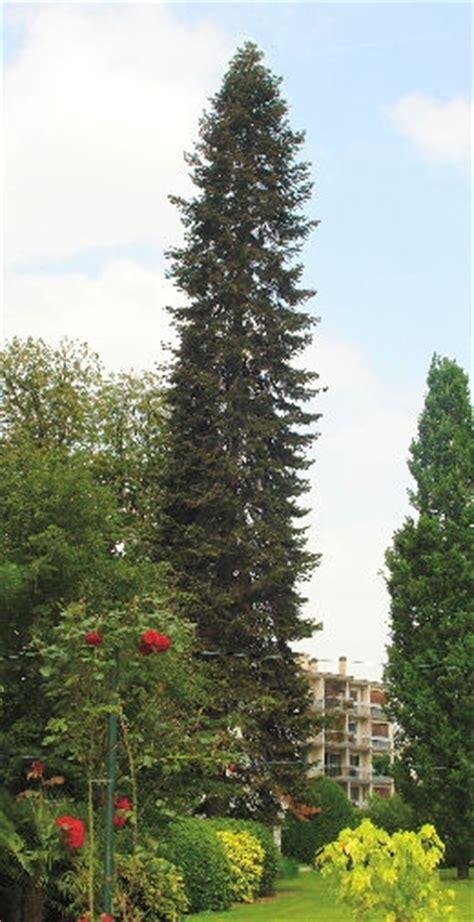 conseils pour planter votre sapin de no 235 l en pot le pouvoir des fleurs