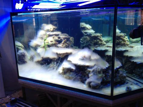 aquarium sur mesure alsace demarrage d un aquarium d eau de mer
