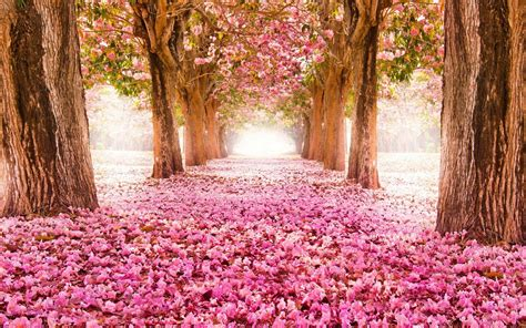 Beautiful Spring Flower Wallpaper Backgrounds