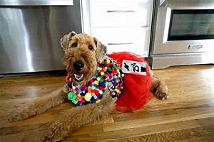diy costumes for dogs my and