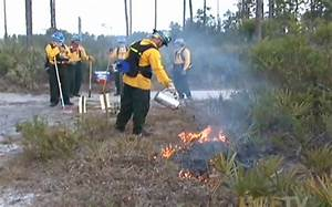 Campus to Conduct Prescribed Burn - University of Central ...