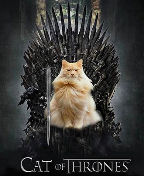 game  thrones characters     cats