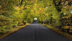 Download, Wallpaper, 3840x2160, Trees, Road, Autumn, Scotland, 4k, Uhd, 16, 9, Hd, Background