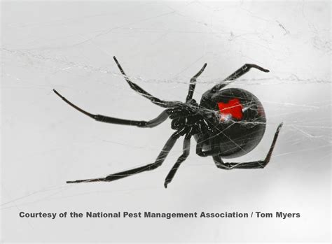 Latest Pest And Rodent Updates From Complete Pest Control