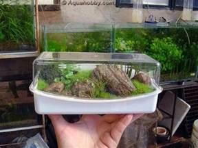 Small Fish Tanks Aquariums