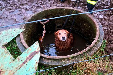 mechernich hund schnuff wird aus jaucheschacht gerettet