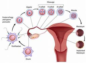 Fertilizationpink Families