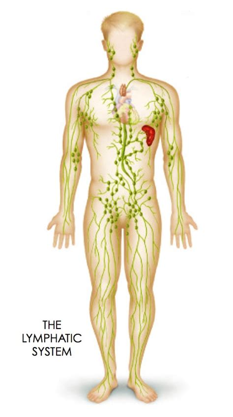 lymphatic system drain congested symptoms juicing fluids common tight