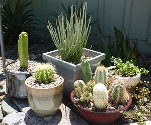 Cacti Landscaping  Large Potted Cactus And Succulents  Interior Designs Flauminc Com