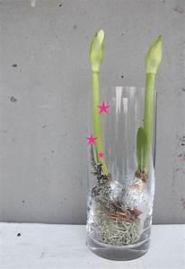 Blumenzwiebeln Im Glas : ein tolles mitbringsel f r die advents und feiertage amaryllisknollen mit blattsilber im glas ~ Markanthonyermac.com Haus und Dekorationen