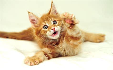 Cute Cats #9  Cute Cats