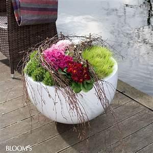 Herbstblumen Für Kübel : mit primeln k bel bepflanzen k bel mit birkenzweige zaun garten diy fr hling im garten ~ Buech-reservation.com Haus und Dekorationen