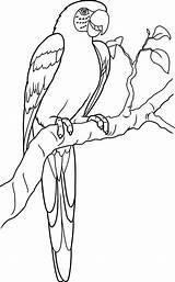 Parrot Coloring Lovely Pages sketch template
