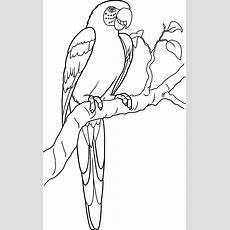 Lovely Parrot Coloring Page  Download & Print Online Coloring Pages For Free  Color Nimbus