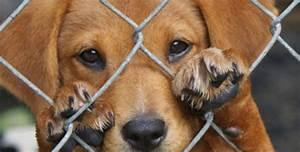 Animal En G : presidente santos sanciona ley contra maltrato animal el ~ Melissatoandfro.com Idées de Décoration