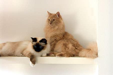 Katze Kleine Wohnung by Streit Mit Dem Vermieter Und Der Hausgemeinschaft