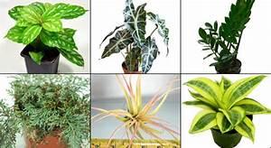 NEHERP - Vivarium Gecko Plant Kits