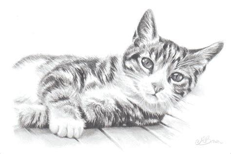 tabby cat cat art print pencil drawing   cat gift