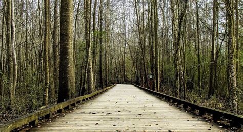 imagen gratis camino madera camino paisaje bosque