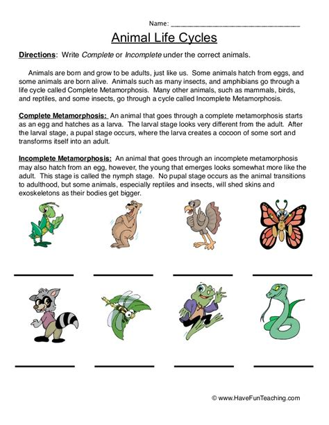 Animal Lifecyclesworksheet