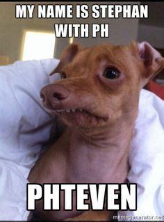 Stephen Dog Meme - tuna the dog meme lol phteven memes are the best cuties pinterest meme memes and