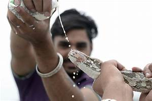 In Pictures  Nag Panchami 2017  Or The Hindu Snake Festival