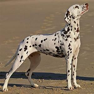 50 Best Black And White Dog Names